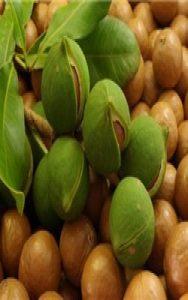 Макадамия - невиданный орех с уникальным спектром действия